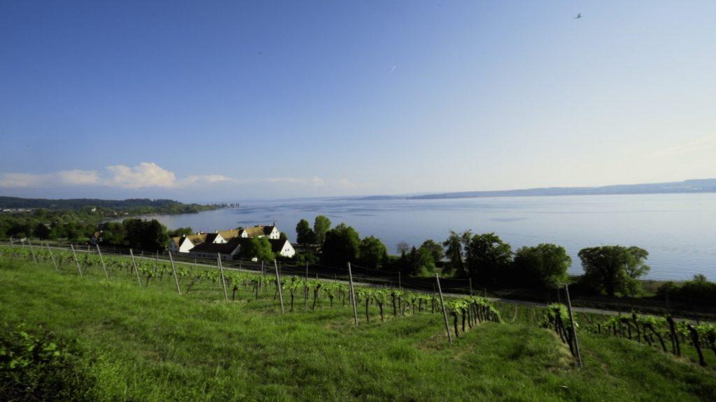Bodensee vor der Birnau